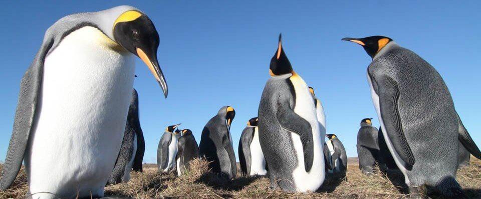 Tierra del Fuego y Pingüino Rey