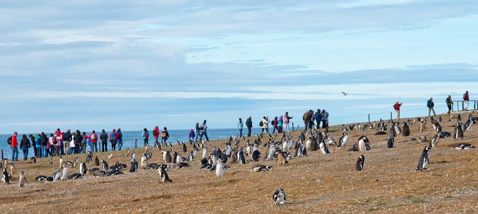 Pingüienera Isla Magdalena e Isla Marta