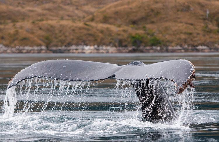 Patagonia Insitu