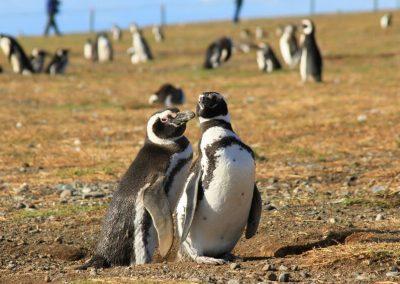 Lo Mejor de la Patagonia Chilena Full Patagonia Tour